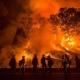 Siccità e incendi: in fumo 1565 ettari di boschi