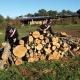 Furto di legna all'interno del Parco Nazionale del Gargano: 4 arresti