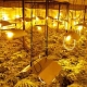 Scoperta una serra per la coltivazione di marijuana: arrestati padre e figlio