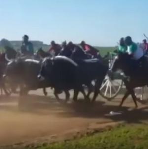 """Tragedia alla """"Corsa dei buoi"""": 78enne muore travolto da cavallo"""