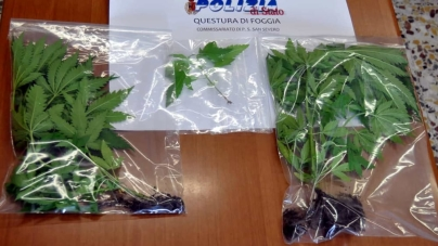 Coltiva piante di marijuana sul balcone: arrestato 21enne