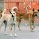 Accolto ricorso contro Comune di Panni: si può dare cibo ai cani randagi