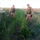 Coltivazione di marijuana in aperta campagna: arrestato 49enne pregiudicato