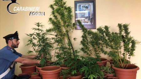 Coltivava 23 piante di marijuana: in manette 44enne pregiudicato