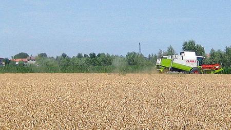 Crollo del prezzo del grano, Agrinsieme pensa a una mobilitazione