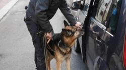 """Due trafficanti arrestati con oltre 300 grammi di droga: fondamentale l'ausilio di """"Vaco"""""""