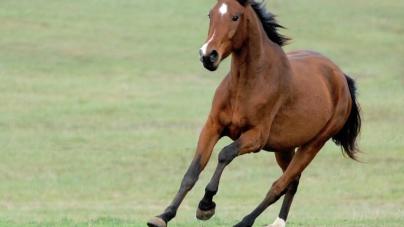Cavallo in fuga piomba su un'auto: tre feriti
