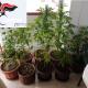 Maxi retata dei Carabinieri a Cerignola: arresti e sequestri per droga e armi