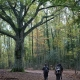 Si perdono mentre cercano un lago inesistente nella Foresta Umbra: ritrovati 4 ragazzi