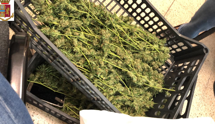 Detenzione di oltre 4 kg di droga e coltivazione di 10 piante di marijuana: arrestato