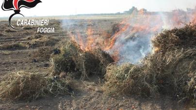 Bruciano rifiuti nelle campagne tra Stornara e Cerignola: denunciati 3 bulgari