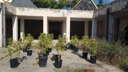 Scoperta e sequestra una piantagione di marijuana: in manette un giovane