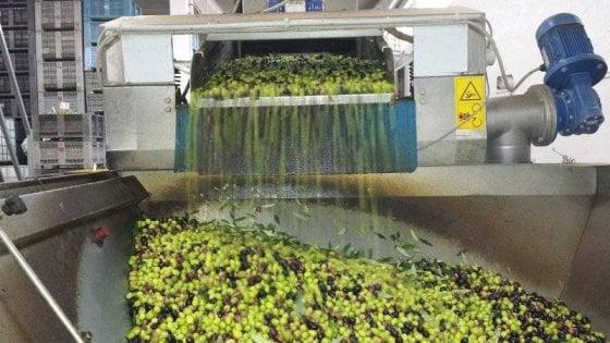 Evade dai domiciliari per molire le olive: 58enne beccato nel frantoio ed arrestato