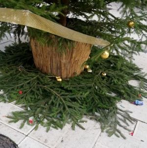 Danneggiato l'albero di Natale di San Severo, distrutte anche le palle decorative